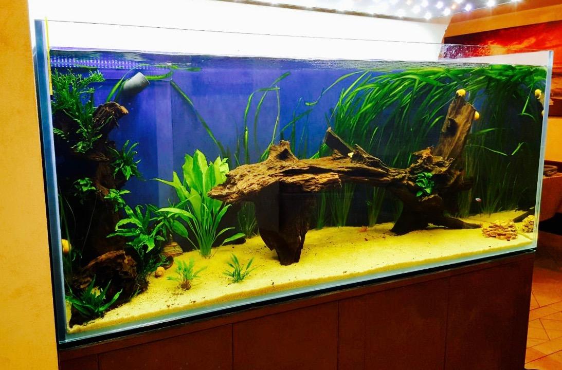 Produzion e vendita acquari su misura acquari malberti for Acquario vendesi